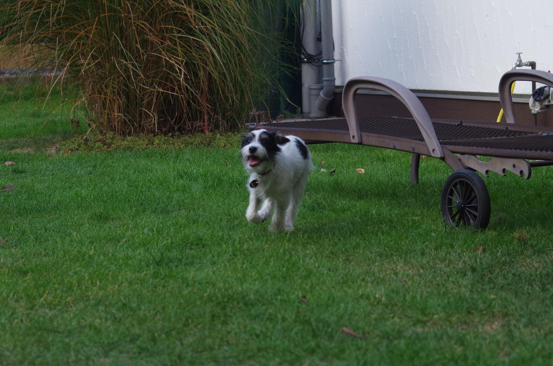 Sammy , der Wirbelwind...