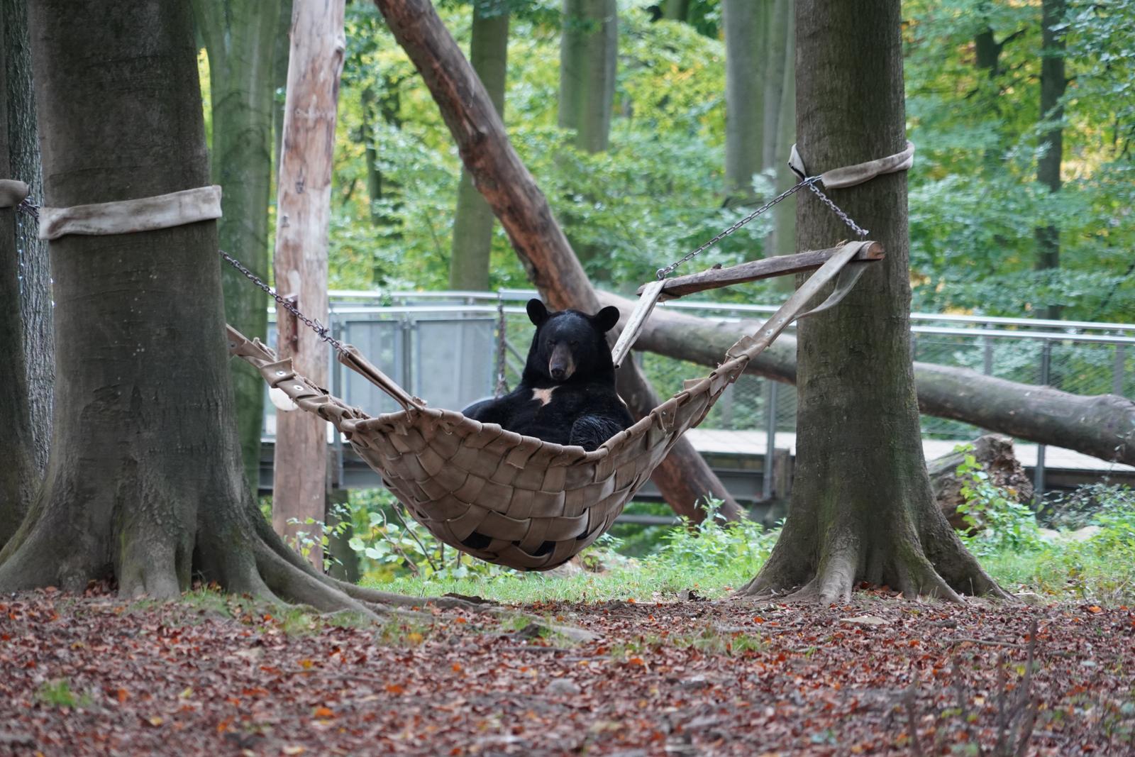 Auch die Bären machen mal Pause