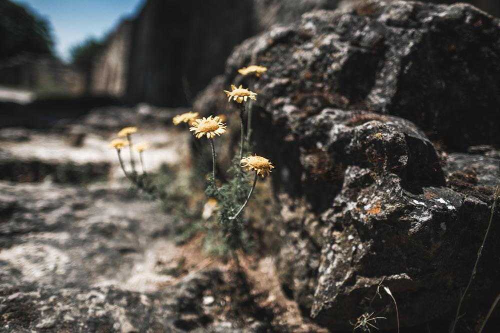 gelbe-Blumen