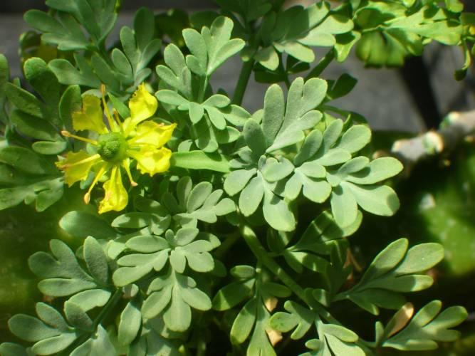 Plantas Medicinales Página Web De Megaempresa