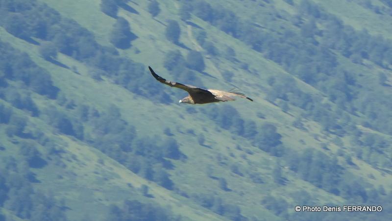 De nombreux vautours nous ont survolé, mais ils ne reviendront pas