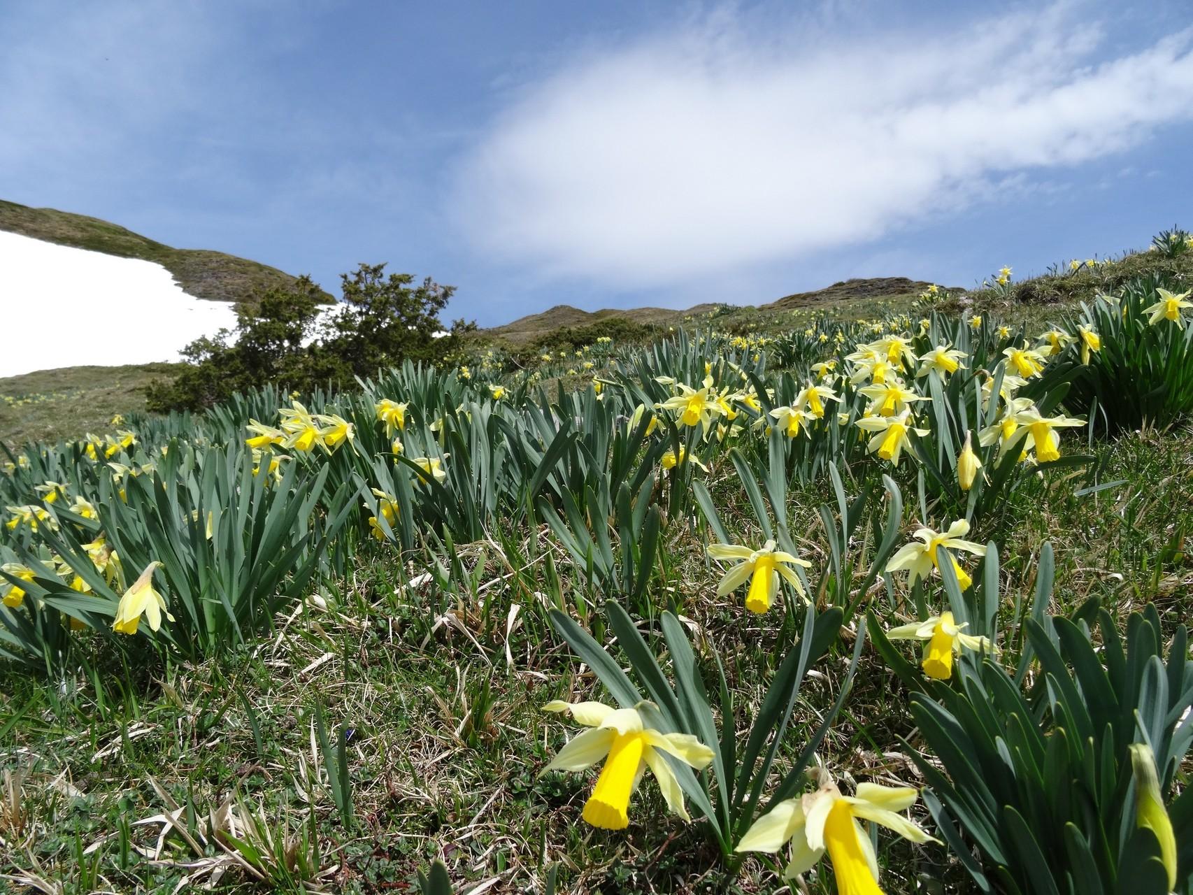 Il y a encore de la neige même à basse altitude, mais le printemps est là