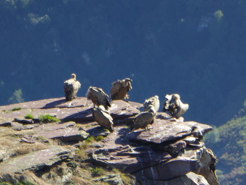 ...les vautours.