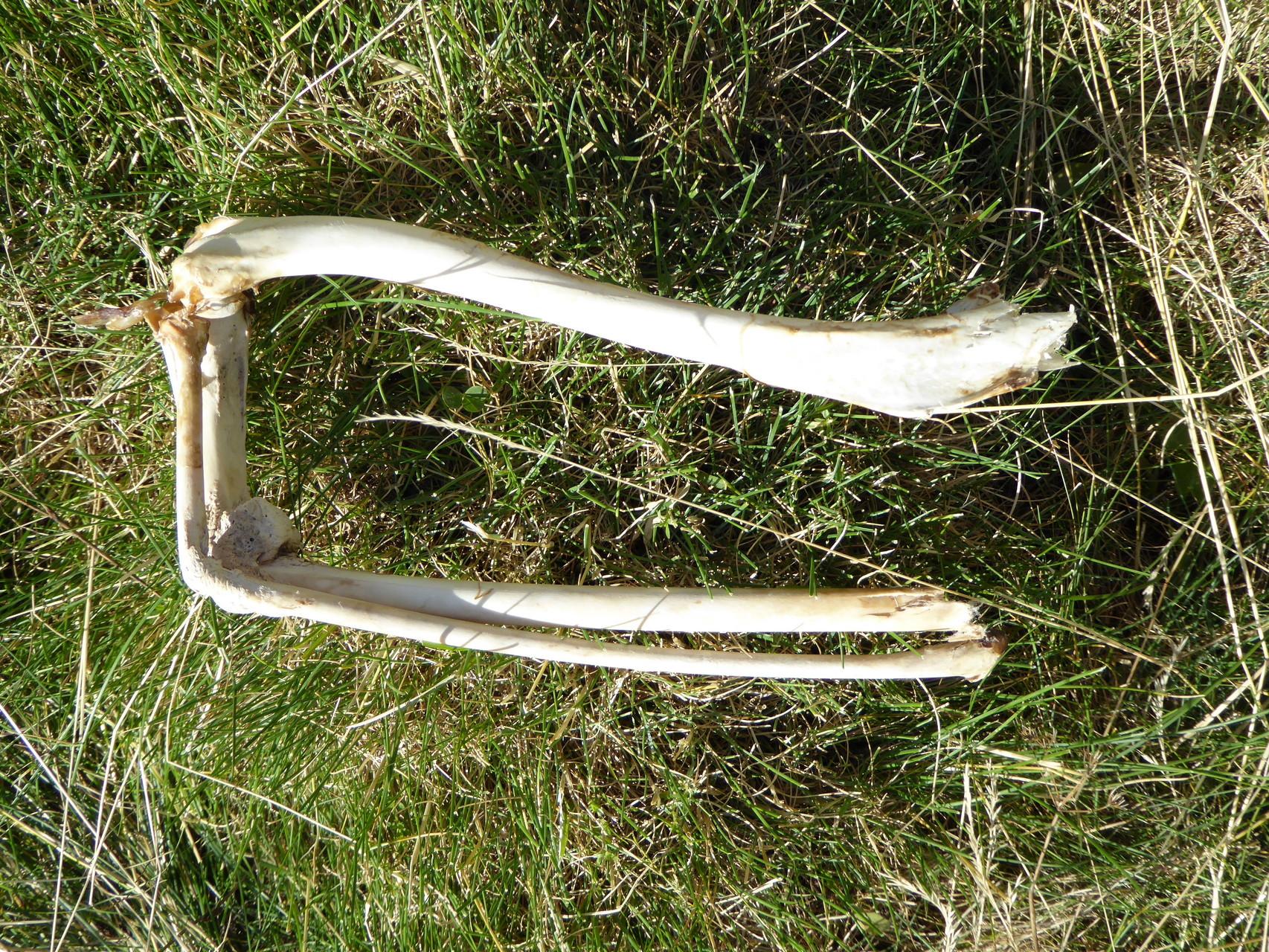 ...flûtes percées datant d'il y a 30 000 ans dans la grotte d'Isturitz au pays basque.