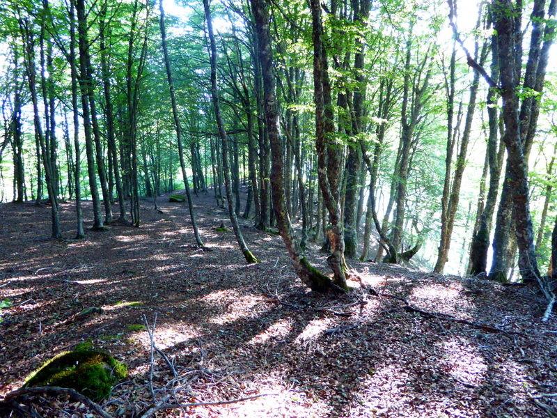Après les hautes fougères, montée matinale très agréable dans ce sous bois..