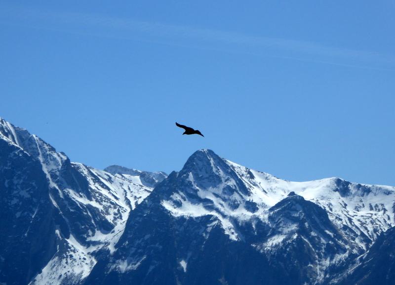 Nous sommes descendus, mais le vautour reste là-haut majestueux dans son vol. A bientôt