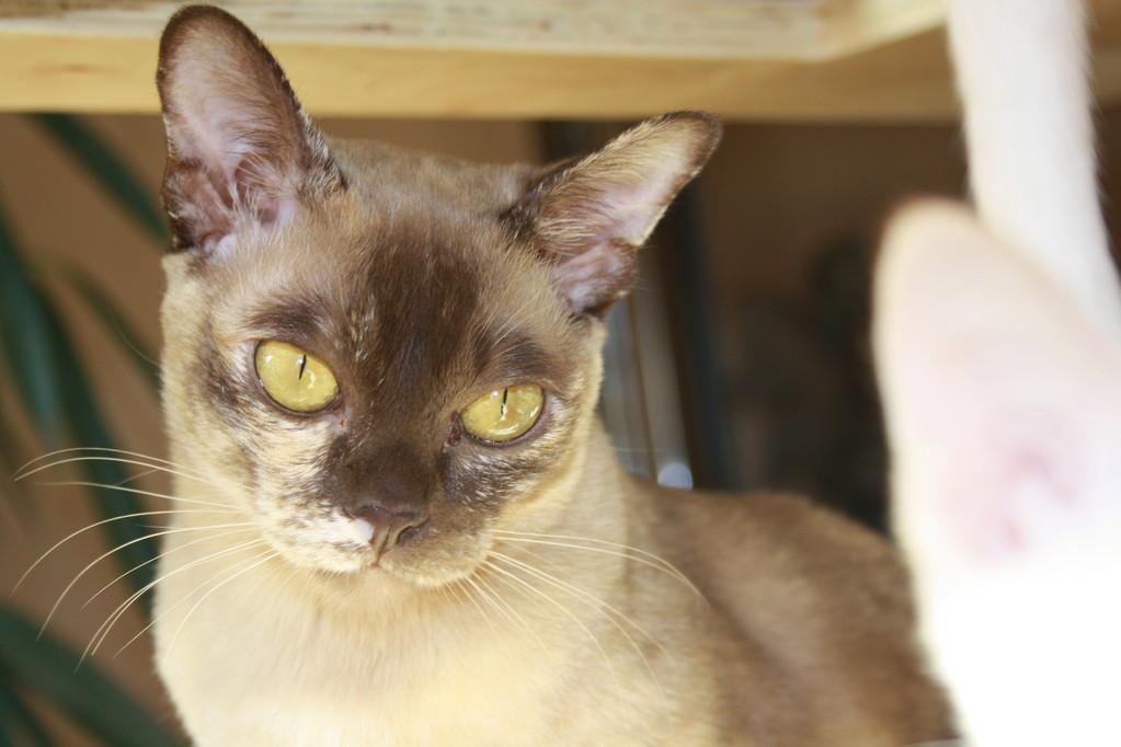 Vor ihrem ersten Wurf hatte sie noch schöne gelbe Augen