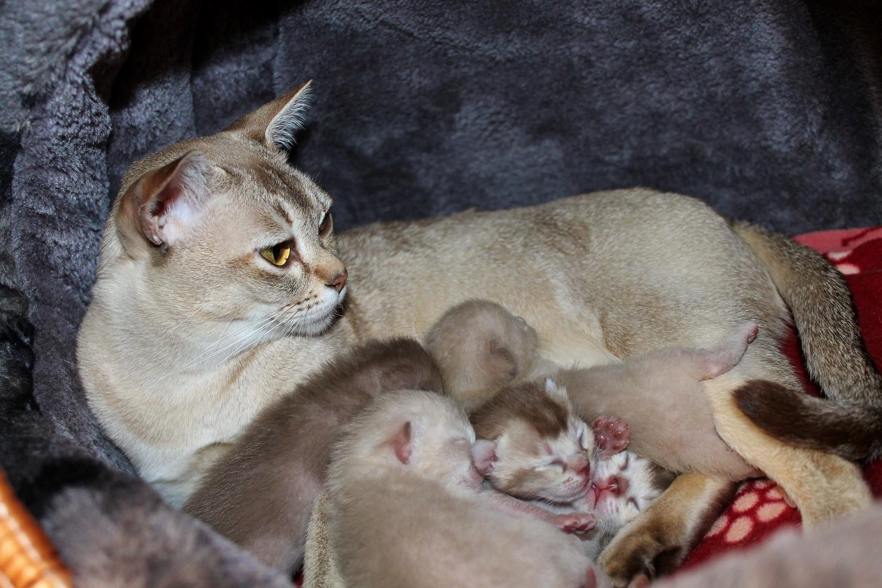 Die glückliche Cirmi mit ihren Kitten