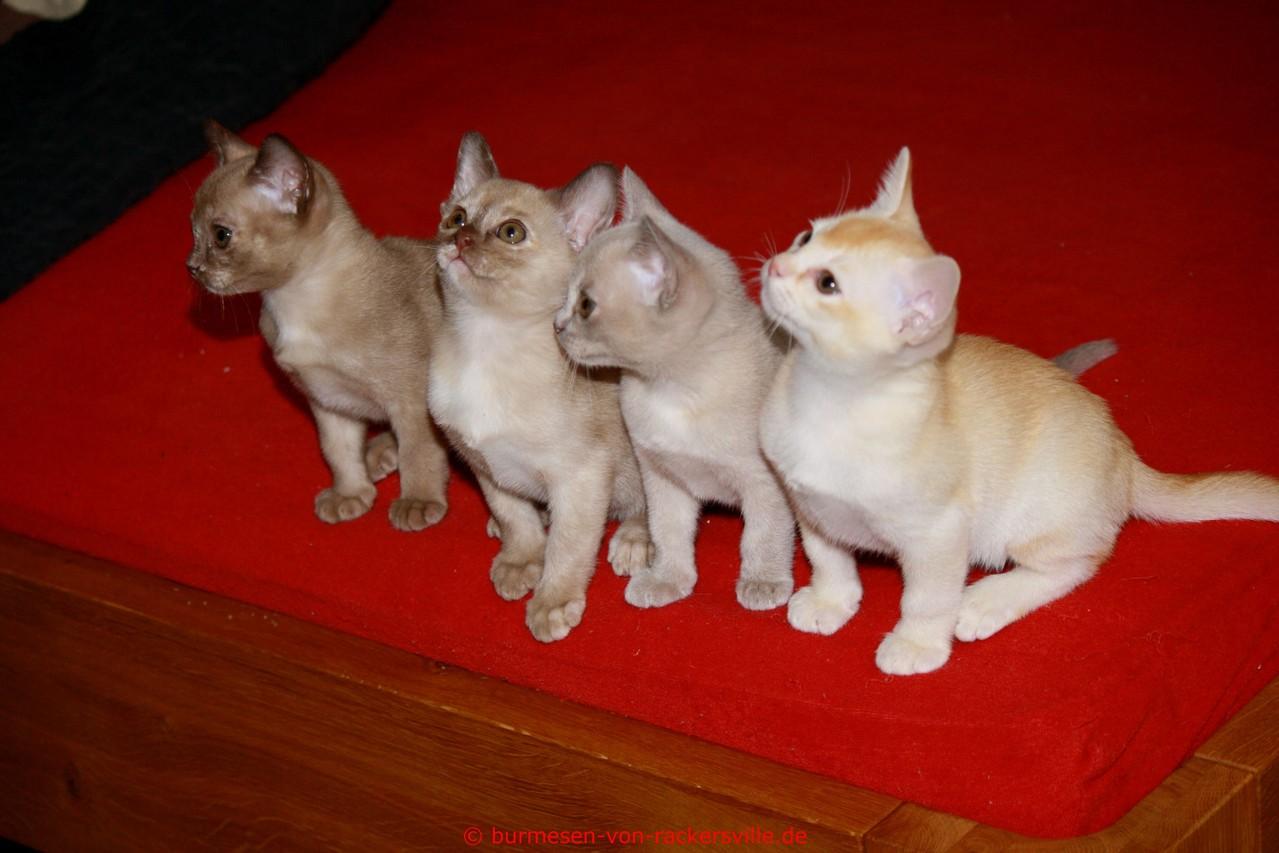 von links:Darcy, Dascha, Djeany, Dean