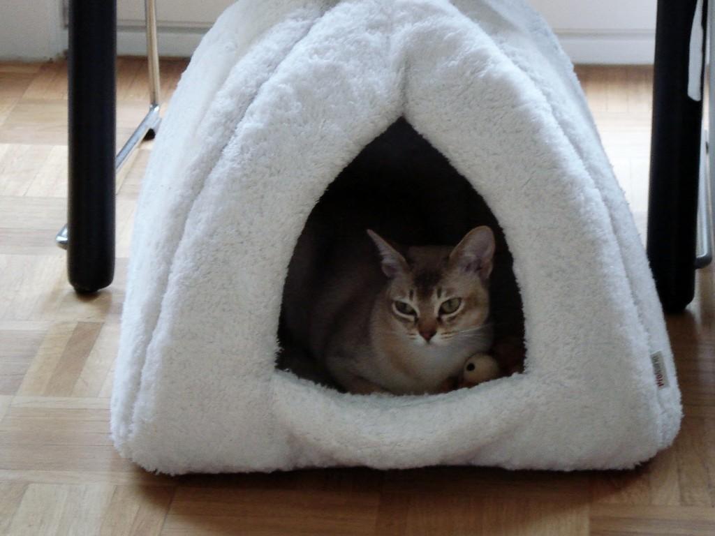 Hallo ich bin Candy, ich liebe meine Höhle!
