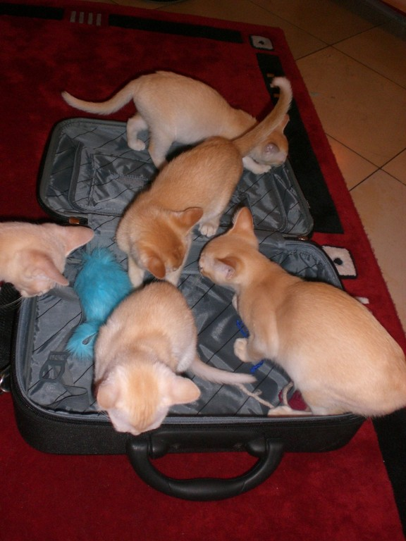 Oh, traveltime, my cuddle mouse have to be packed!