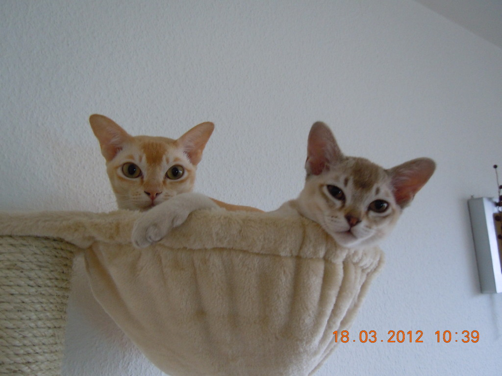 Amelie (left) and Clyde