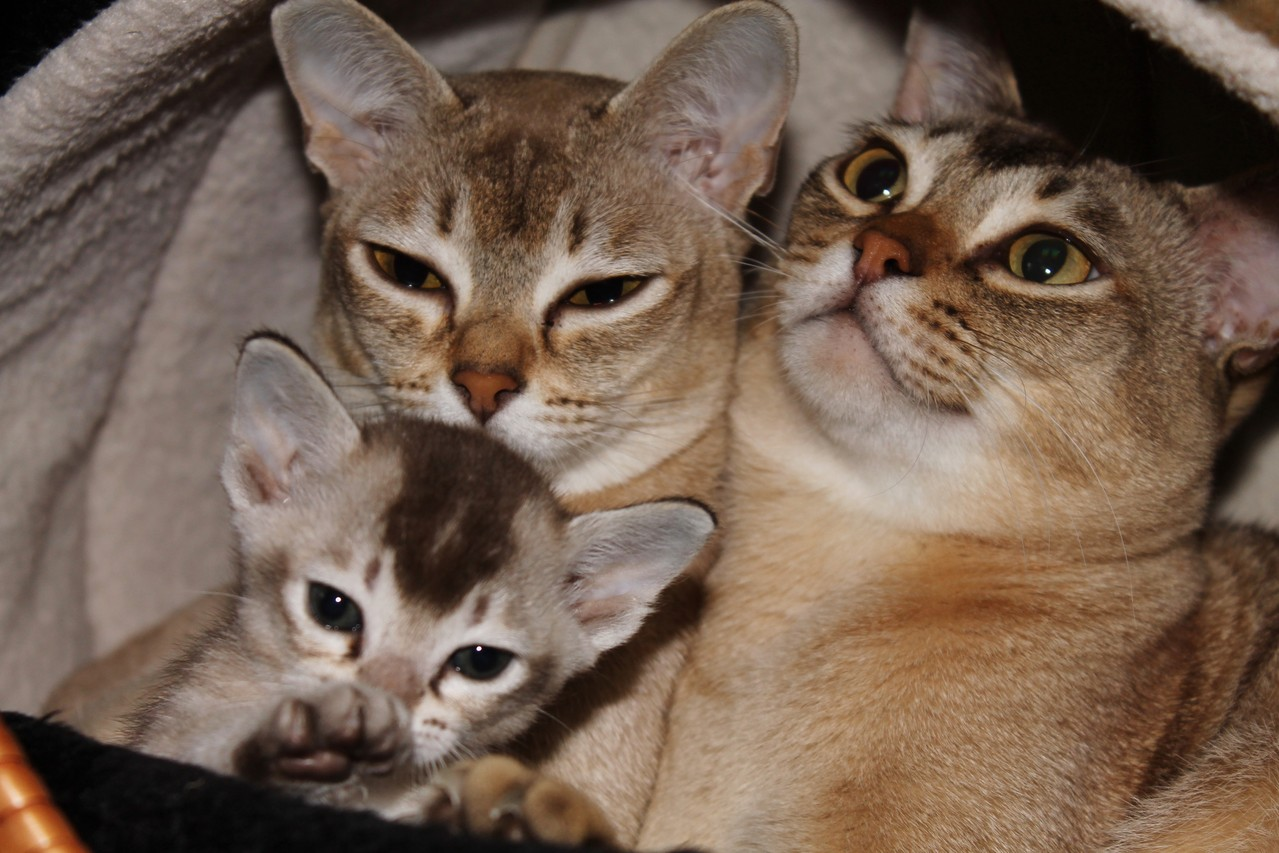 3 Generationen ticked tabby