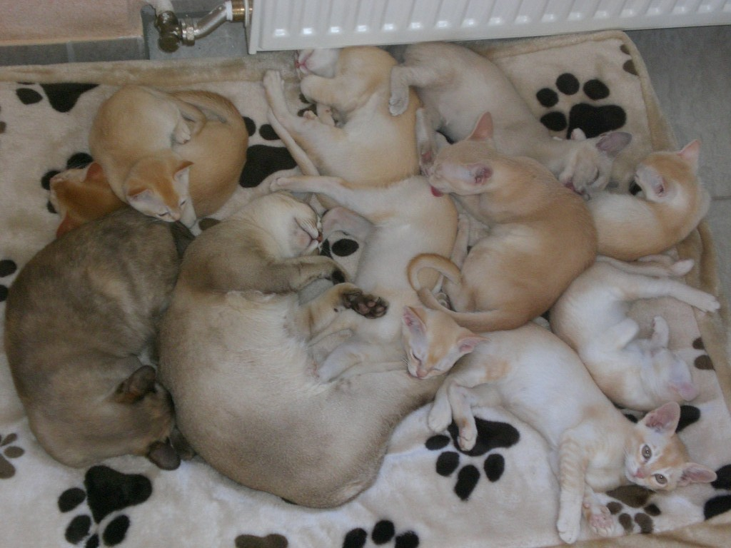 Cuddly place at the central heating!