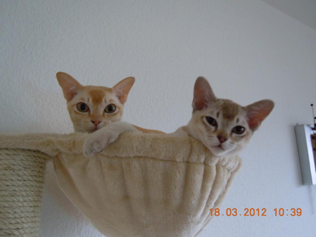 Clyde (rechts) und Amelie genießen ihren tollen Aussichtsplatz