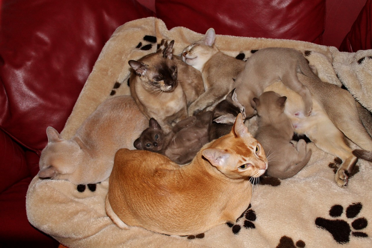 Kuschelig warmes Plätzchen für die Kitten in der Mitte!
