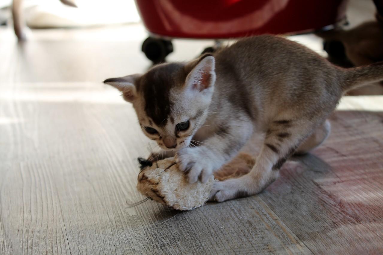 """Enola hat die erste """"Maus"""" gefangen."""
