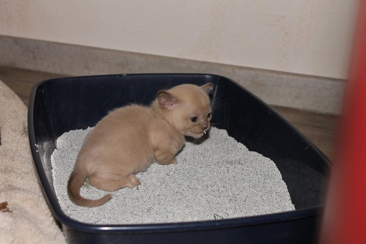 Das Kittenklo wird schon benutzt