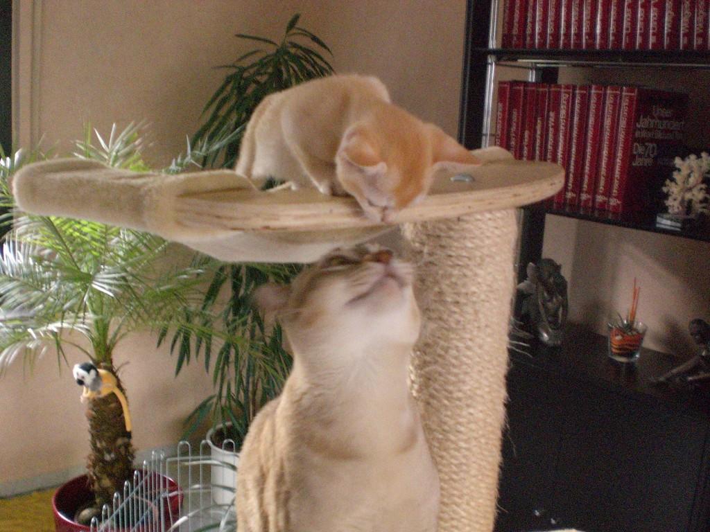 Hey du da oben, dass ist eigentlich mein Platz!
