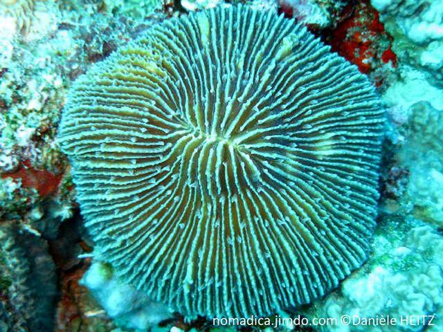 corail, cur, champignon