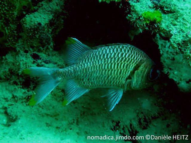 poisson, nageoires, taches, jaunes