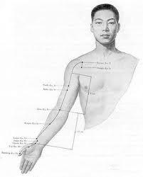 Illustration - Méridien du Poumon