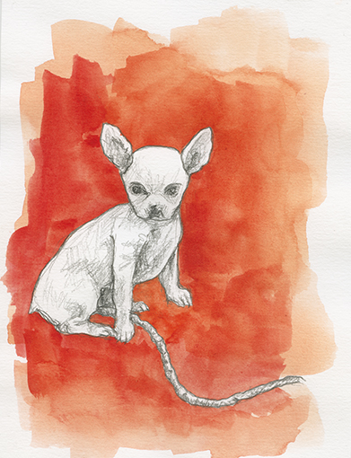 Chihuahua, Aqaurell auf Papier, 13,9 x 21,6cm, 2016