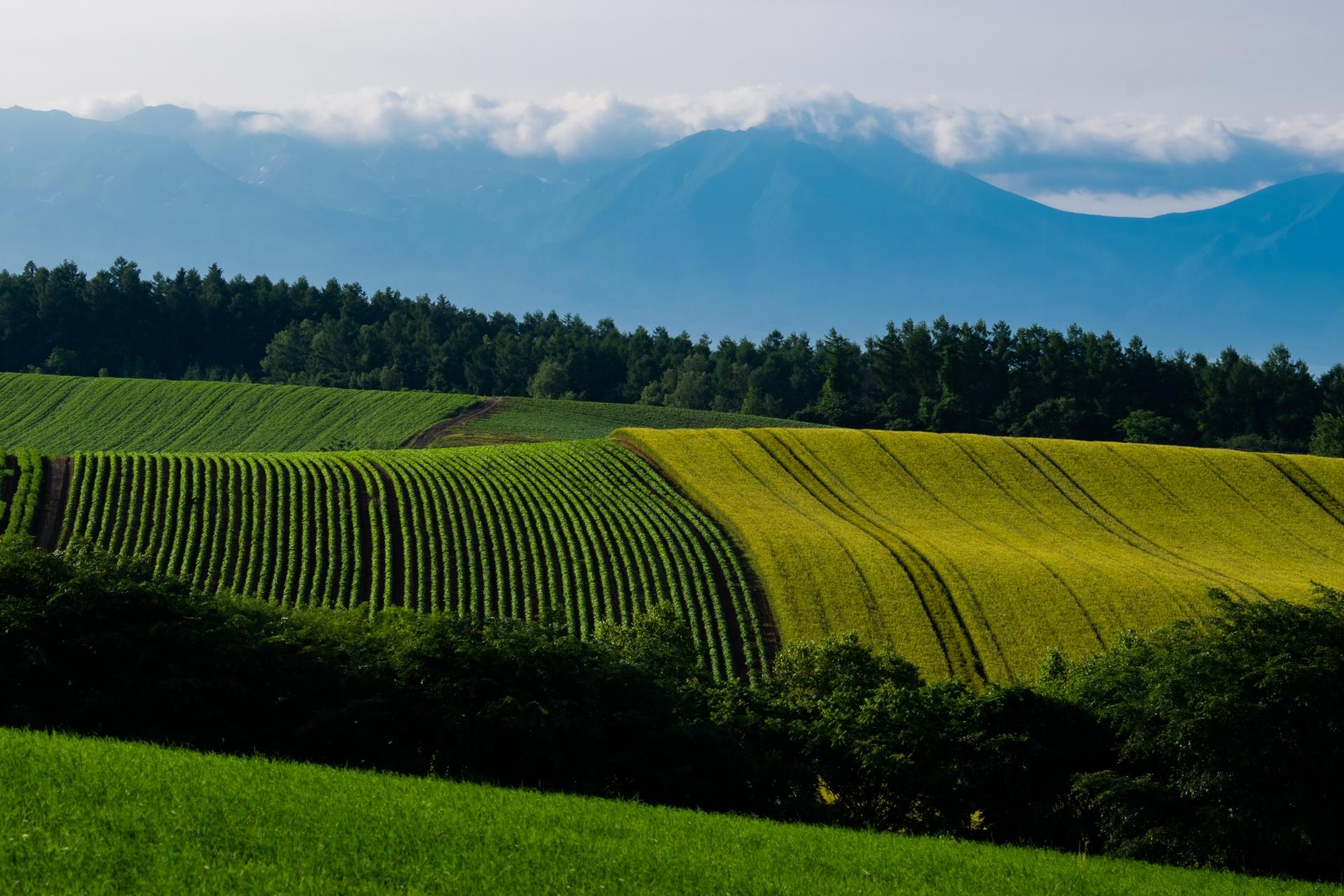 ●夏の北海道は最高ですよね