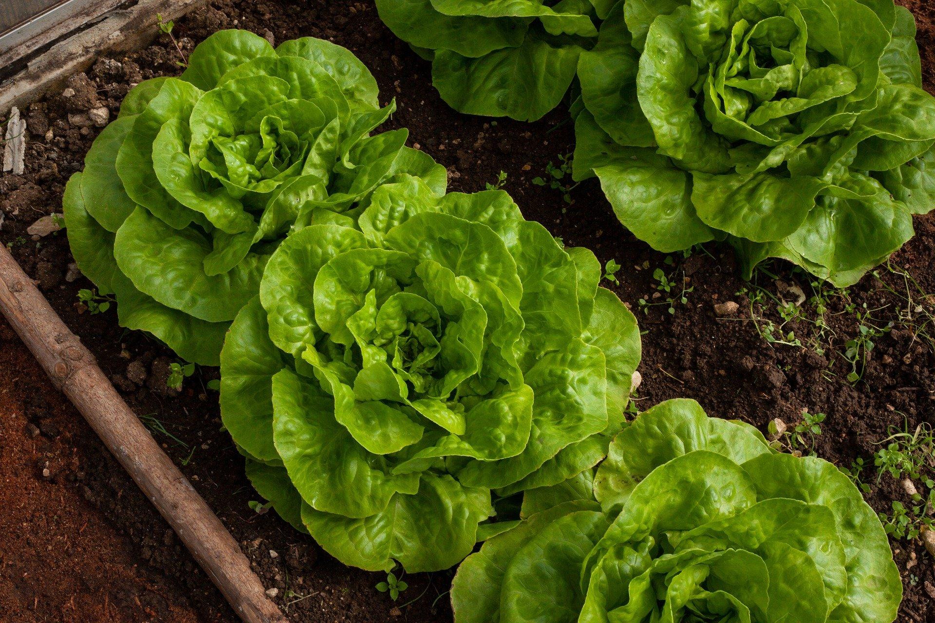 Eigenes Gemüse im Garten – Tipps und Tricks für Selbstversorger