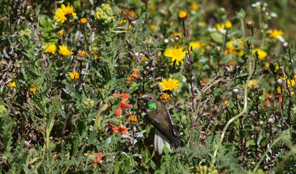 Wer findet den Kolibri
