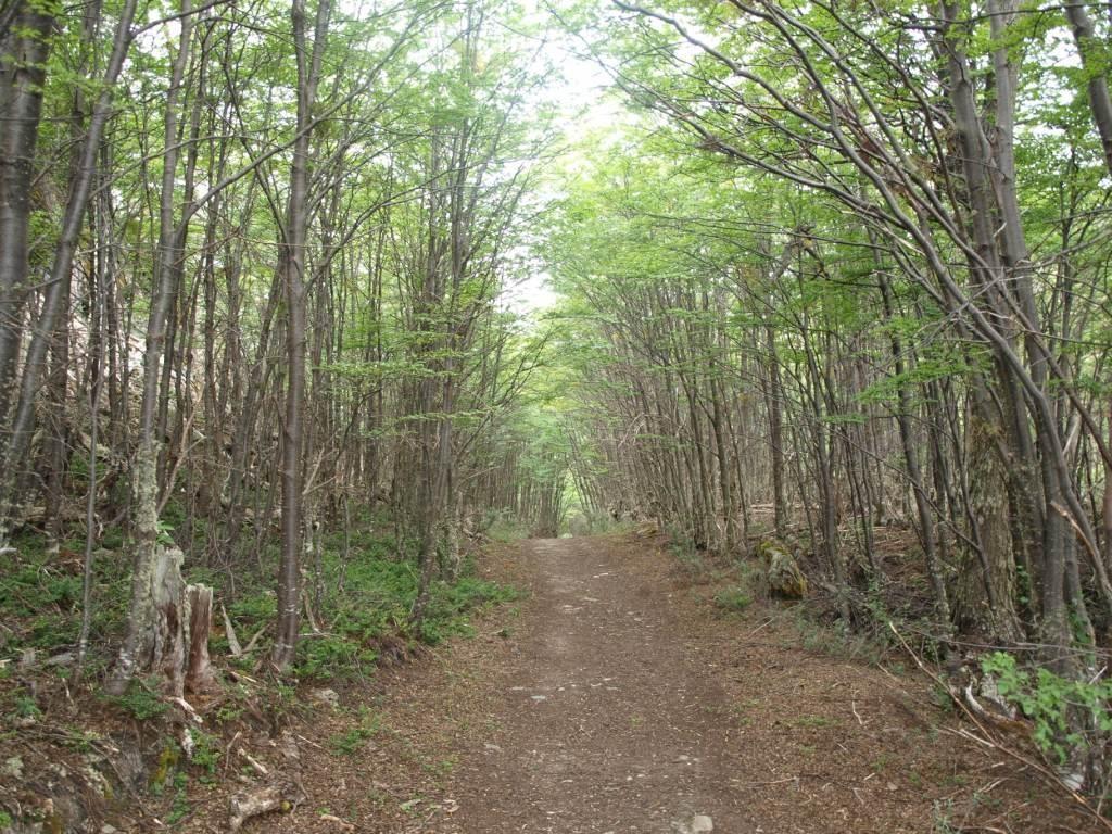 und märchenhaften Wäldern