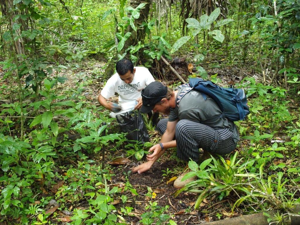 unter genauer Beobachtung wird mit der Manchete hantiert und ein Avocadobaum gepflanzt