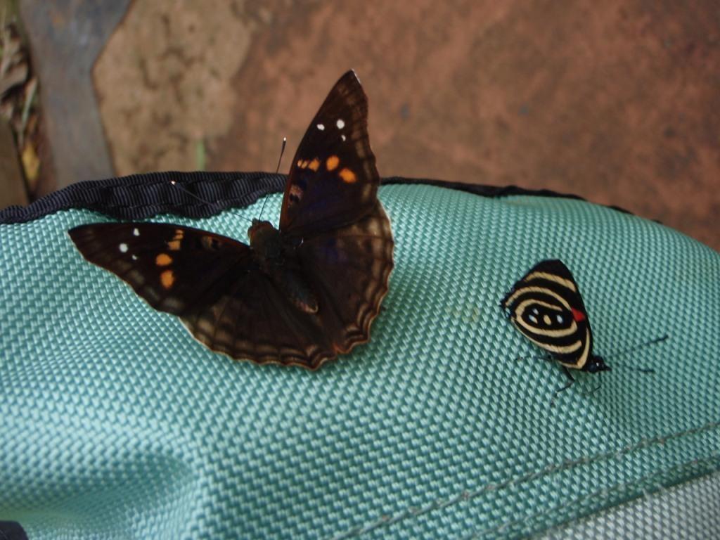 viele schöne Schmetterlinge
