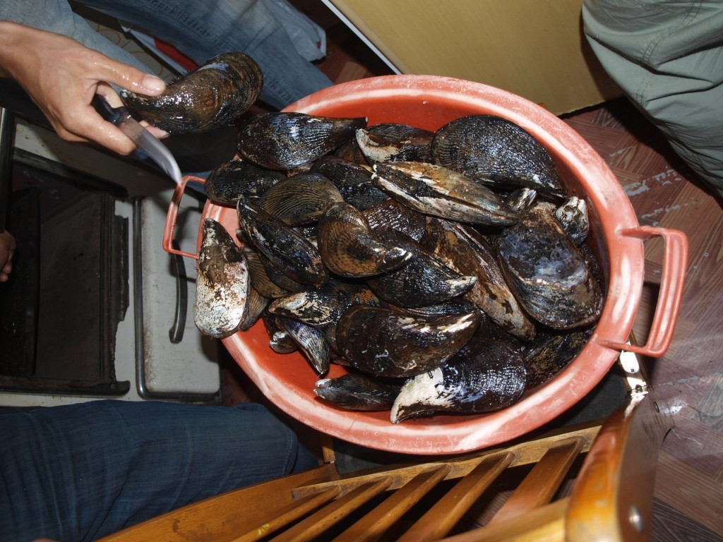 Curanto... Spezialität von der Halbinsel Chiloé gabs für uns am 31.12., zuerst Riesenmuscheln