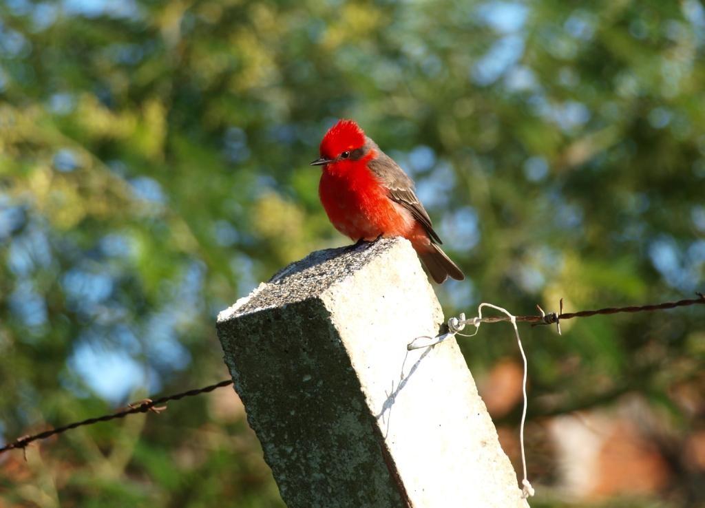 auch Vogel wir nennen ihn mal Zorro, stattet uns einen Besuch ab