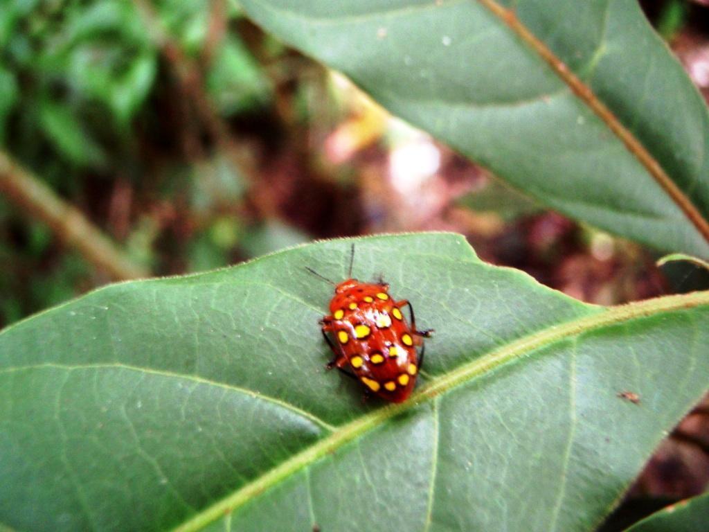 oder Käfer