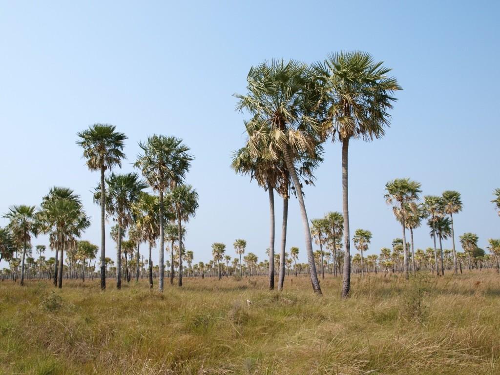 Viele tausend Palmen haben wir gesehen