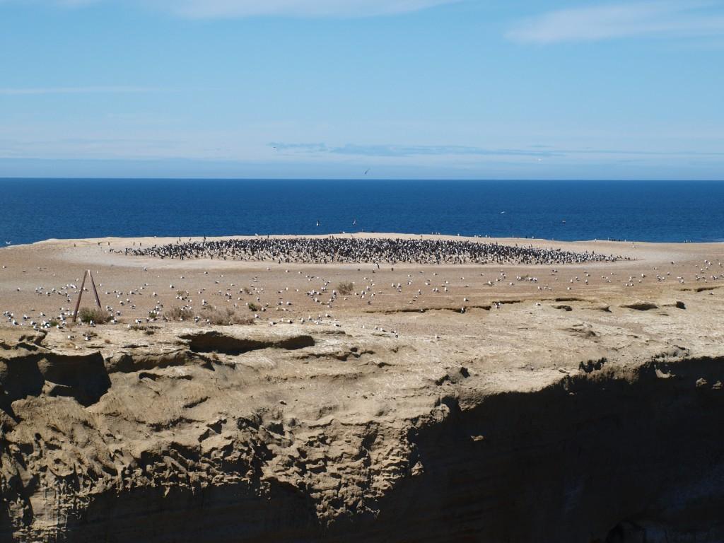 Vogelinsel im Natioanlpark Monte Leon