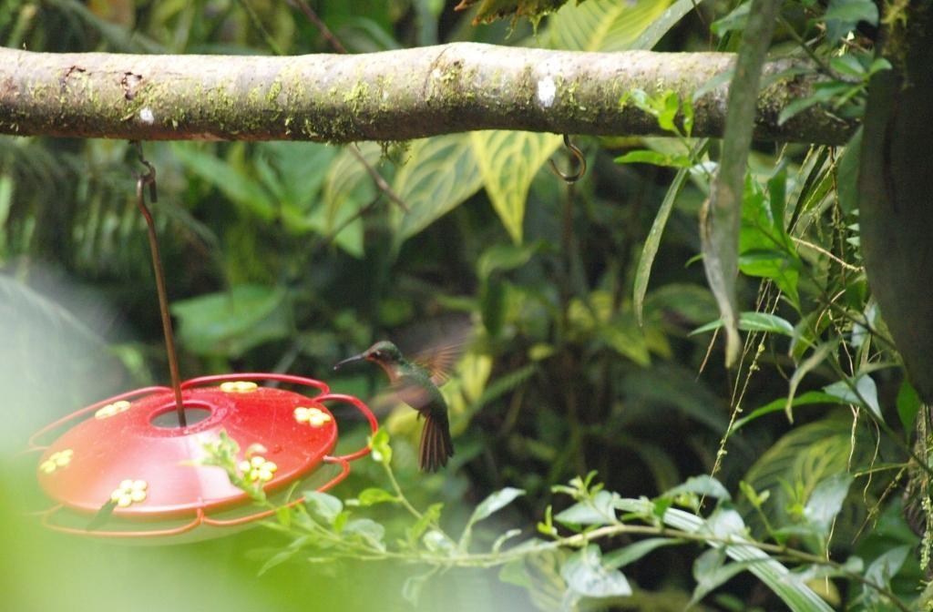 auch sehen wir wahnsinnig schnelle Kolibris