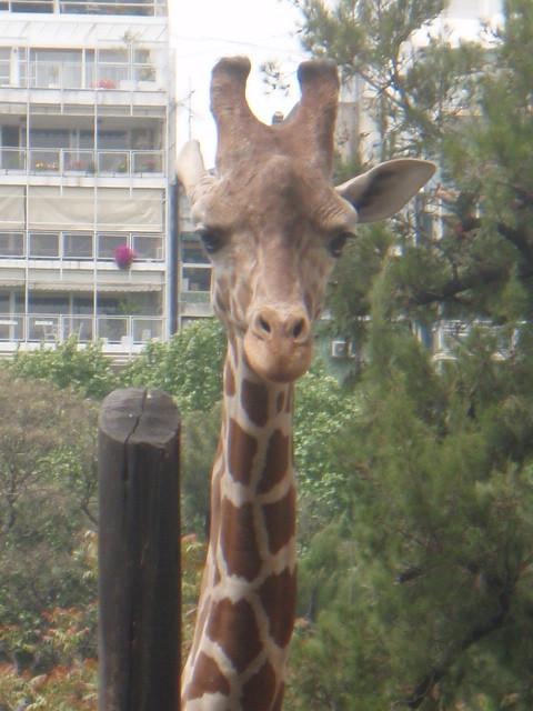 ahh passt irgendwie nicht so, dies war bereits der zoologische Garten ;-)