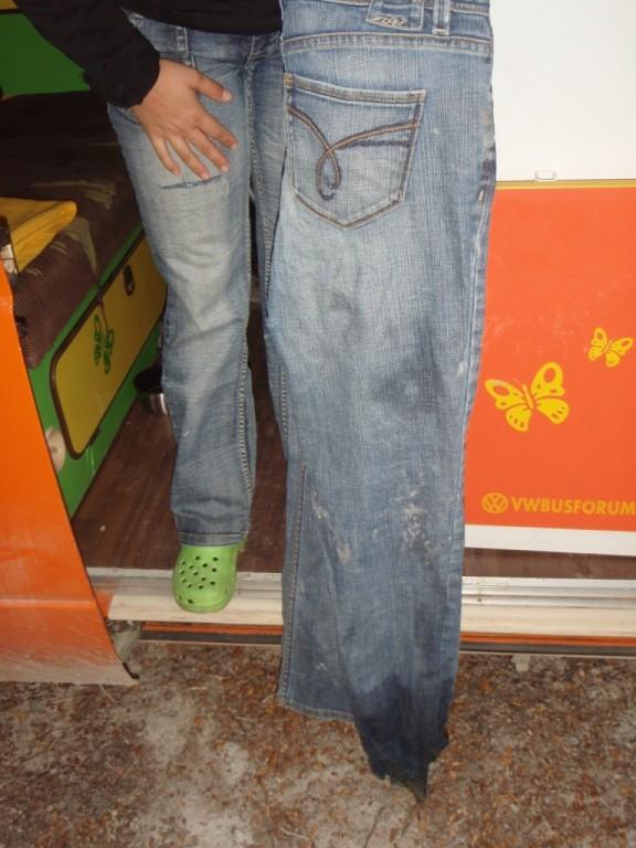 Die Kuh verwechselte die Jeans mit der Weide