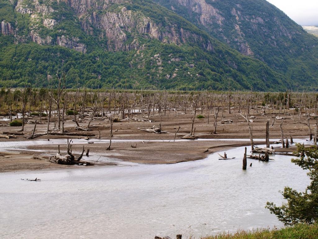 Bosque Muerto. Toter Wald. Überreste nach einem Vulkanausbruch