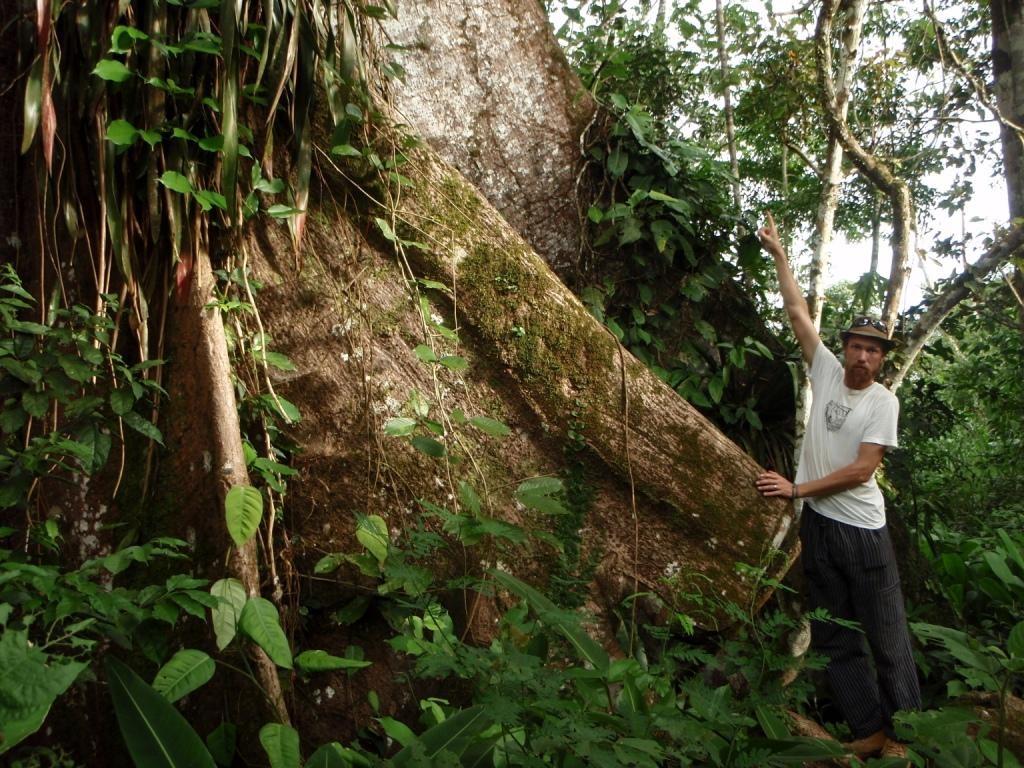 weiter auf der Wanderung entdecken wir welch einen riesigen Ceibo Baumstamm