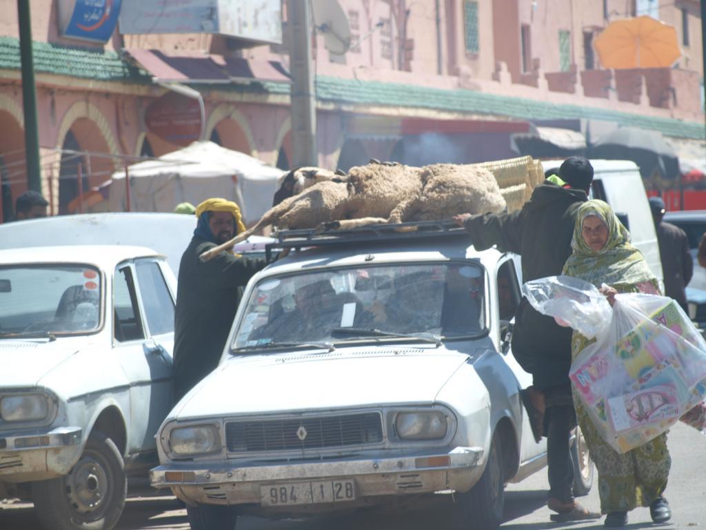 Schafe werden lebend kurzerhand auf dem Dach transportiert