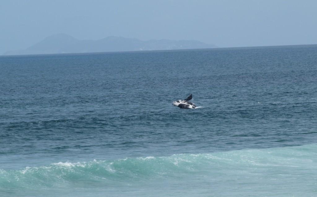 die Wale beim spielen beobachtet