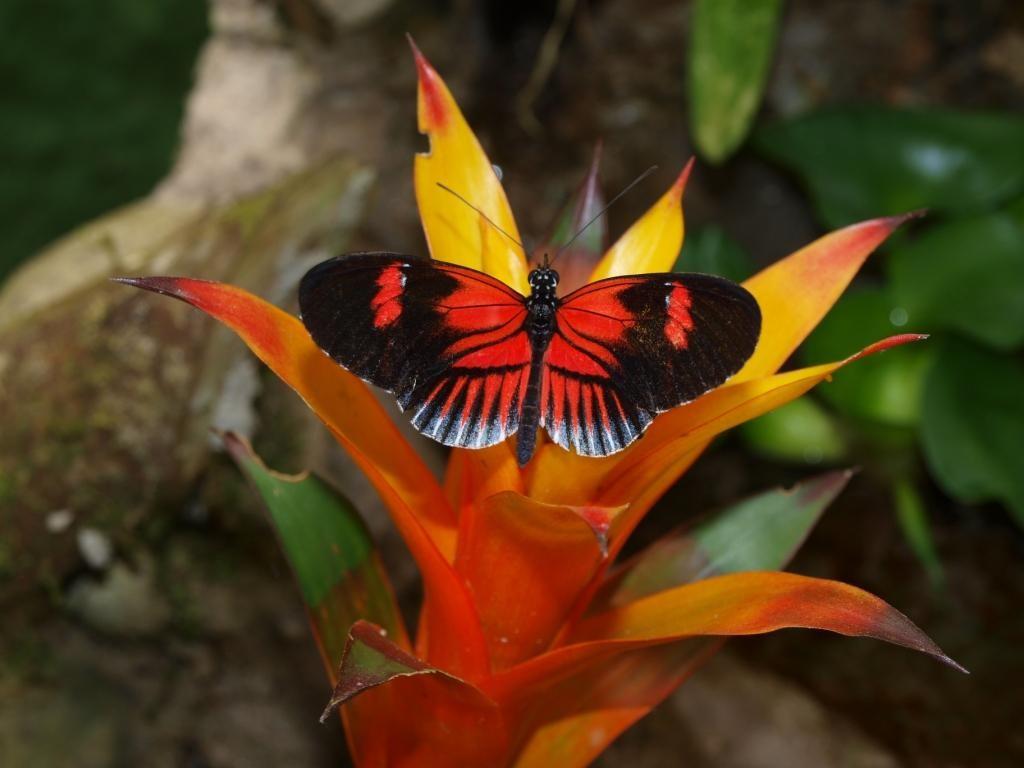 Besuch einer Schmetterlingsfarm in Mindo