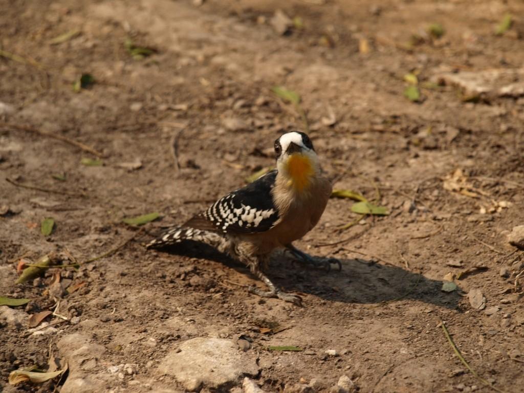 Im Nationalpark Rio Pilcomayo wurden wir zu Ornitologen