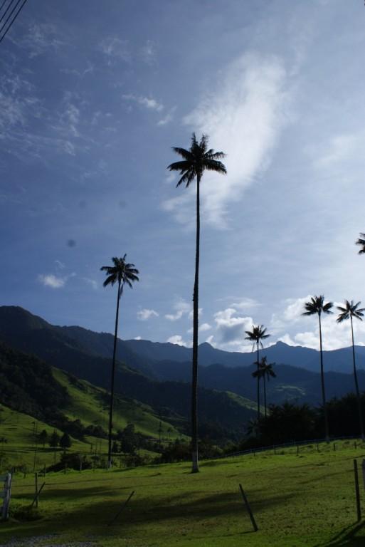 dafür waren die riesigen Palmen um so eindrücklicher