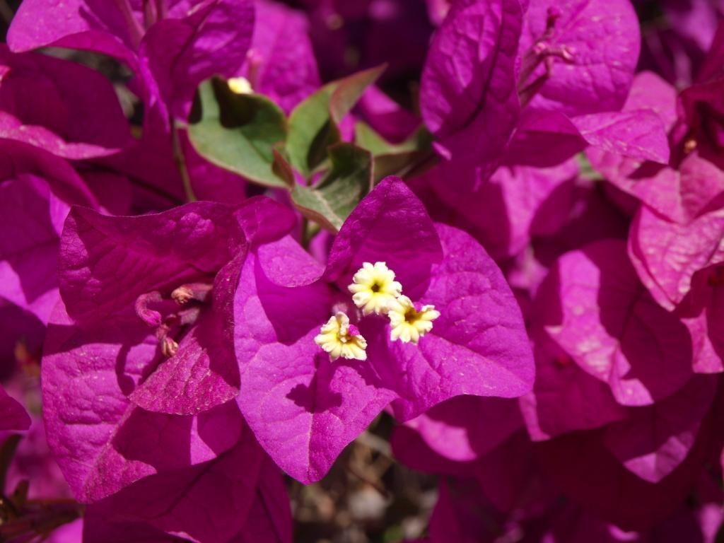 Blümchen in der Blume