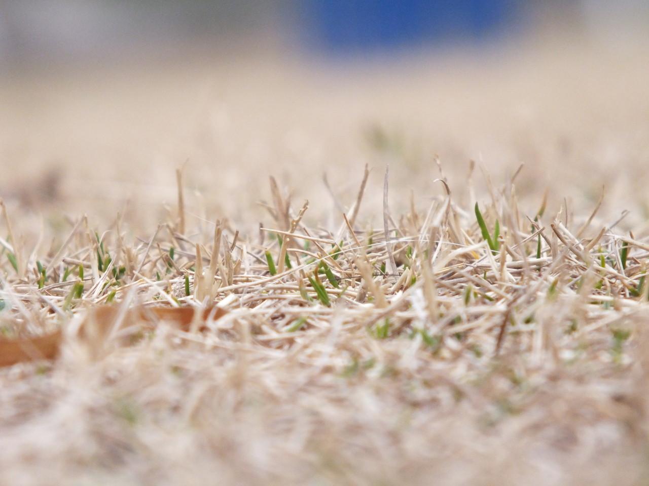 芝生よ、春だよ~。早く出ておいで!